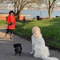 Elaine's dog boarding