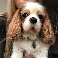 Viktorija's dog boarding