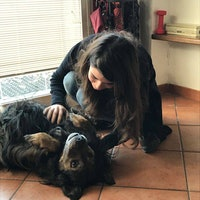 Giulia's dog boarding