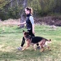vanja's dog boarding