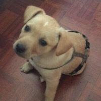 Claudio's dog boarding