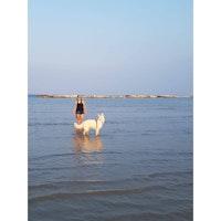 Manon's dog boarding