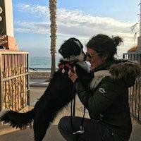 Gemma's dog boarding