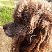 dog walker Shahna