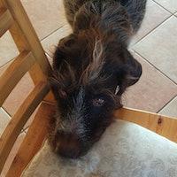 Olga's dog boarding