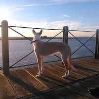 Reyes's dog boarding
